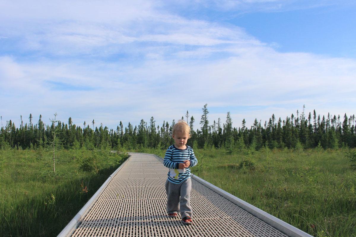 Big Bog State Park MN